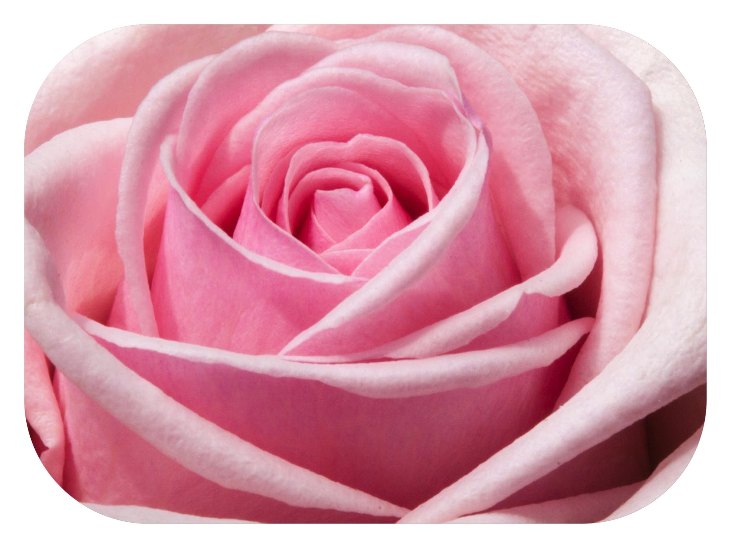 L'hydrolat de rose est une des eaux florales les plus utilisées et conseillées. Calmante, apaisante et anti-oxydante, elle convient aux peau sèches, sensibles et aux peaux matures. Personnellement je ne l'utilise plus depuis des mois. Je vous explique pourquoi.