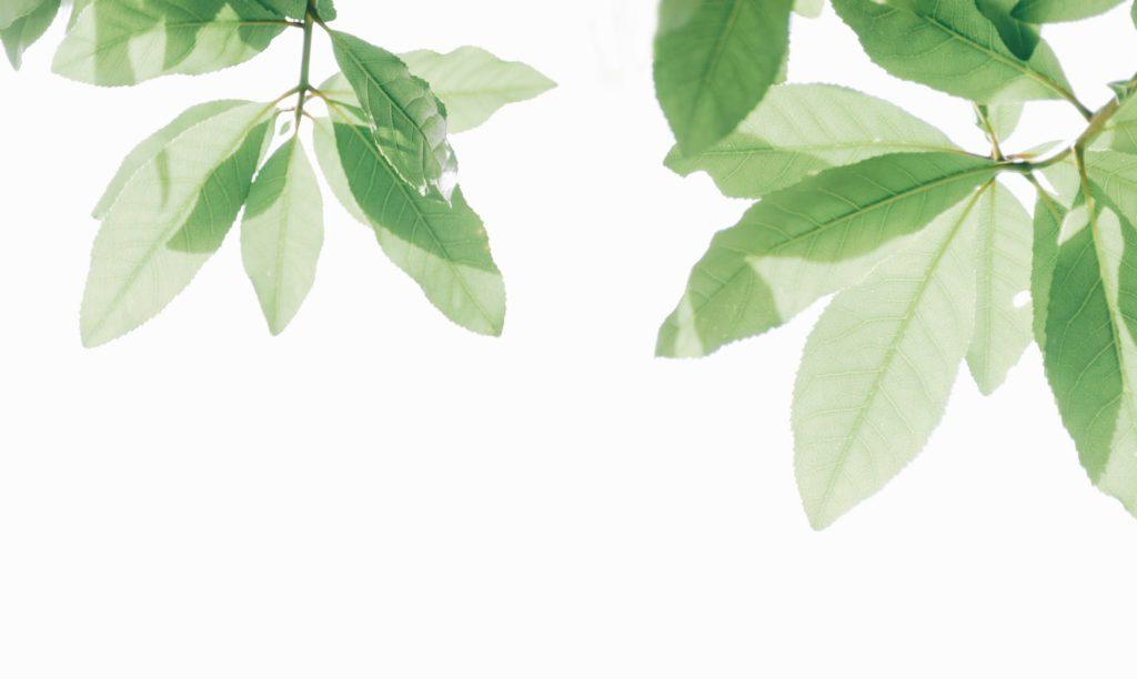 Découvrez les produits naturels à consommer pour renforcer le système immunitaire
