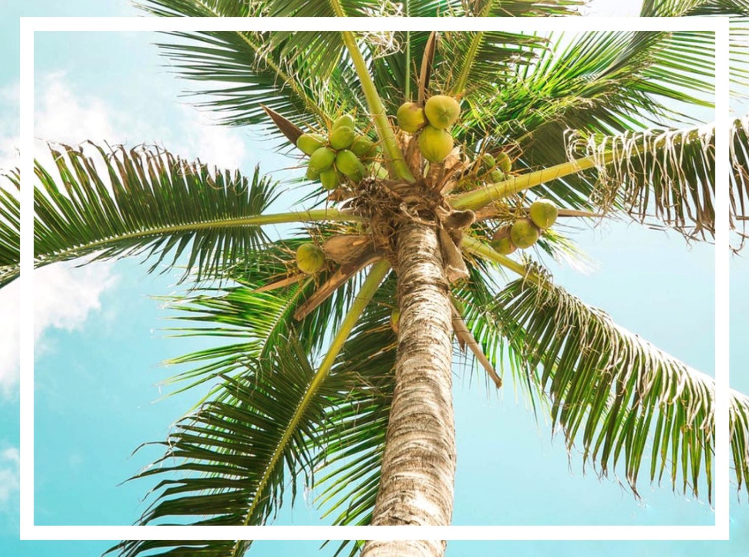 L'huile de coco est-elle vraiment bonne pour la santé ? Aujourd'hui on démêle le vrai du faux.